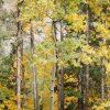 Rockies_2012-09-18_055