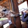 zoo_179-jpg